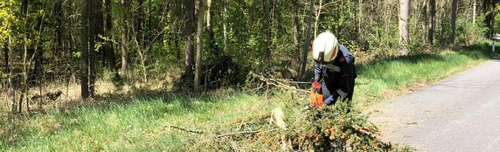 Technischer Einsatz: Baum über Straße